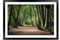 Avenue of Beech Trees, Framed Mounted Print