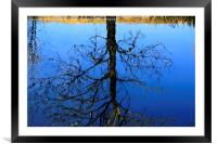 Mirrored Tree, Framed Mounted Print