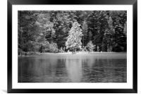 Frosted Trees by Frozen Lake, Framed Mounted Print