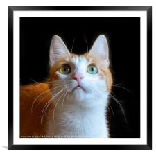 Portrait of red cat isolated on black, Framed Mounted Print