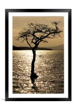 Water Tree, Framed Mounted Print