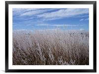 Snow covered patch of weeds, Framed Mounted Print