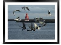 Gulls and Harbour light  041207 , Framed Mounted Print