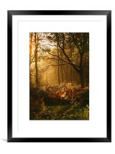 Oxford Summer Morning , Framed Mounted Print