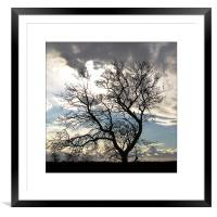 Tree Silhouette , Framed Mounted Print
