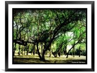 SHADE OF MOTHER NATURE , Framed Mounted Print