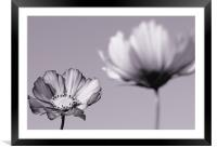 Cosmos , Framed Mounted Print