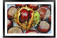 The ruler of conkers, Framed Mounted Print