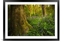 Bluebell Wood, Framed Mounted Print