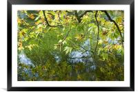 Reflected Leaves, Framed Mounted Print