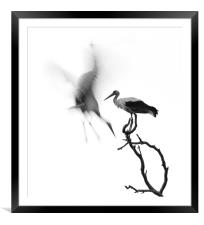 A couple of Storks, Framed Mounted Print