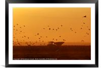 silhouette of a flock of Eurasian Cranes , Framed Mounted Print