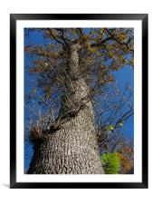 Looking Up a Tree, Framed Mounted Print