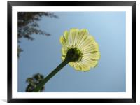 shine and the flower, Framed Mounted Print