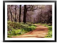 The Blickling Estate Great Wood - Early Springtime, Framed Mounted Print