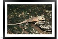 Its a lizards life, Framed Mounted Print