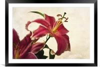 Pink Lilies, Framed Mounted Print