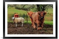 Threes Company, Ewes a Crowd, Framed Mounted Print