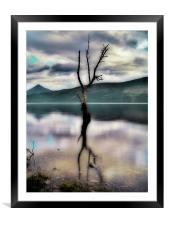 Lone Tree on Loch Rannoch, Framed Mounted Print