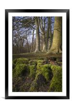 A clump of mossy roots in a wood, Framed Mounted Print
