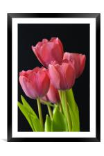 Red Tulips, Framed Mounted Print