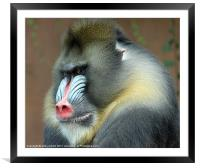 Red Nose Day, Framed Mounted Print