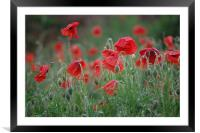 morning poppies, Framed Mounted Print