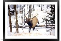 On the Move! , Framed Mounted Print