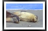 Another Day at the Beach! , Framed Mounted Print