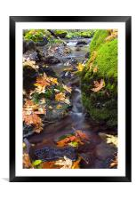 Clearly Autumn , Framed Mounted Print