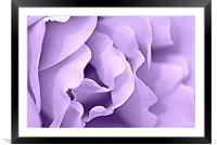 lilac tint, Framed Mounted Print