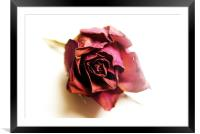 dried rose, Framed Mounted Print