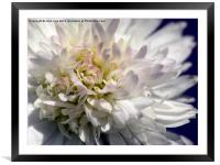 Beauty In The Centre, Framed Mounted Print
