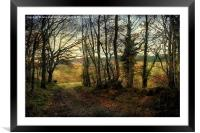 Woodland Walk 2, Framed Mounted Print
