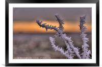 Frosty the Twig, Framed Mounted Print