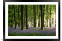 Bluebell wood in Micheldever, Framed Mounted Print