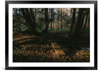 Footbridge and Yew trees., Framed Mounted Print