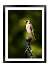 GOLDFINCH #2, Framed Mounted Print
