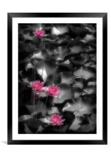 RED WATER LILIES, Framed Mounted Print