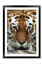 Tiger Abstract, Framed Mounted Print