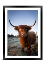 Highland Cow in Frost, Framed Mounted Print