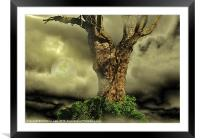 Tree Dreams, Framed Mounted Print