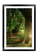 Pathway to Enchantment, Framed Mounted Print