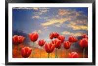 Tulip Sunset, Framed Mounted Print