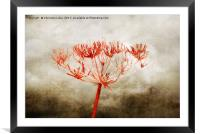 Simplicity, Framed Mounted Print