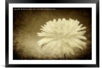 Ice Gold, Framed Mounted Print