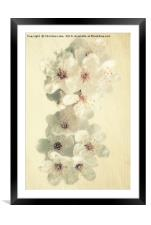 First Blossom, Framed Mounted Print