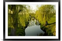 Weeping Willows Richmond Park., Framed Mounted Print