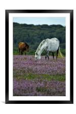 Double Ponies, Framed Mounted Print