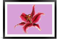 Pastel Lily, Framed Mounted Print